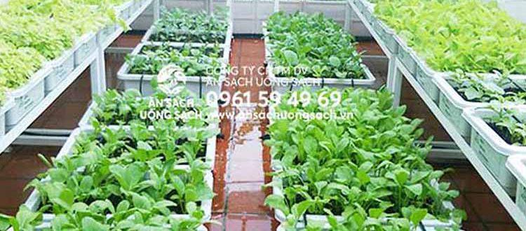 Các mô hình trồng rau sạch trên sân thượng nhỏ tại nhà, văn phòng