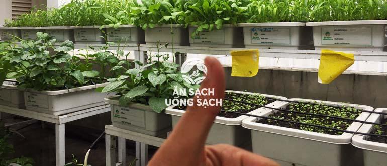 Bí quyết chọn chậu trồng rau đúng cách