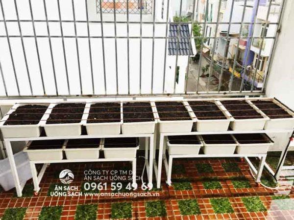 Mô hình trồng rau tiết kiệm diện tích tại nhà