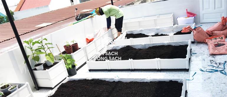 Thi công lắp đặt vườn rau tại nhà