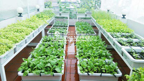 Ăn Sạch Uống Sạch - tư vấn thiết kế mô hình trồng rau trên sân thượng nhỏ thông minh tại nhà