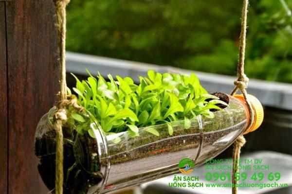 Mô hình trồng rau sạch trong chai lọ