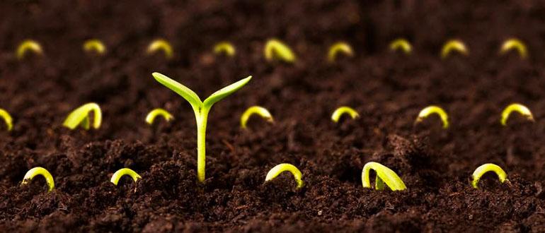 Cách chọn giống cho vườn rau sạch tươi tốt