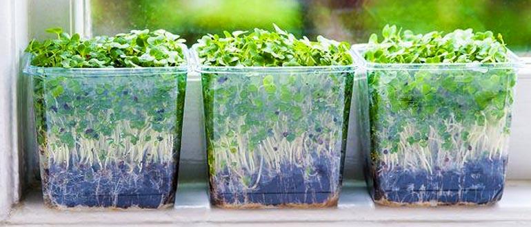 Cách làm vườn rau sạch trong nhà