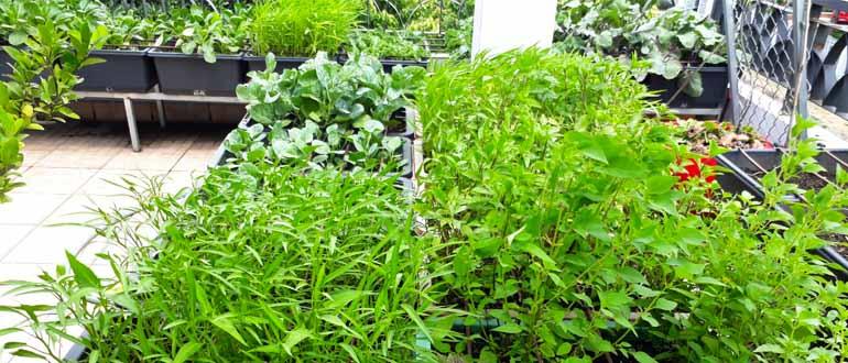 Cải tạo vườn rau sân thượng tại Bình Dương