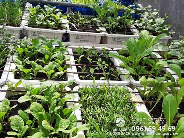 Đa dạng các loại rau trồng