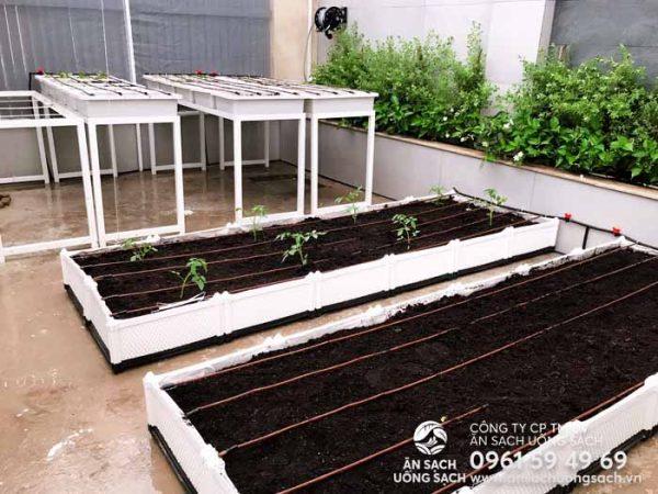 Gieo trồng và cấy cây con