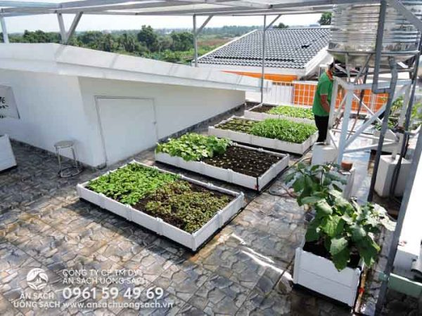 Khu vực trồng rau