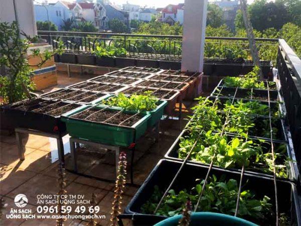Khu vườn sau khi hoàn thành việc cải tạo