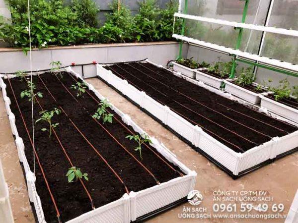 Khu vườn với đa dạng các mô hình trồng rau