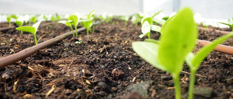 Làm vườn rau tại nhà đơn giản