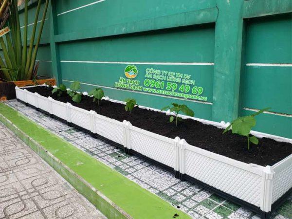 Giàn trồng đậu bắp trong vườn