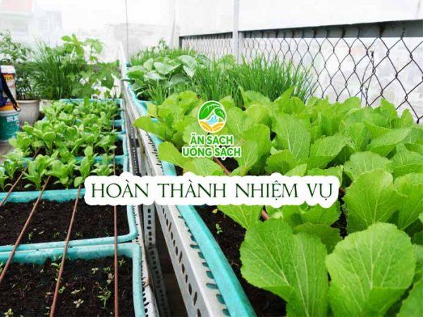 Hoàn thành nhiệm vụ cải tạo vườn rau