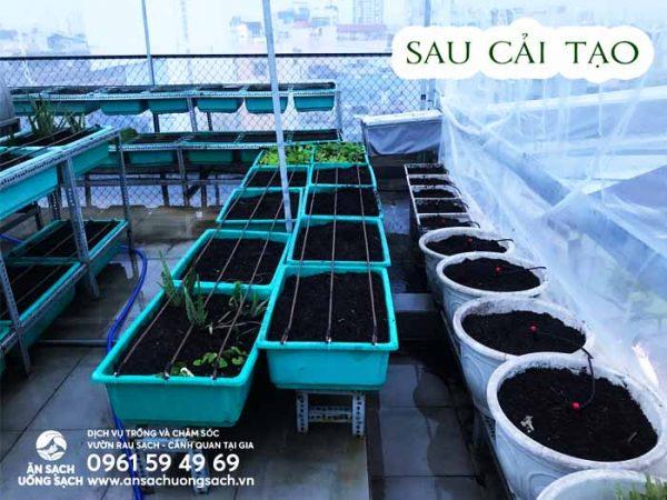 Khu vườn sau cải tạo được bổ sung đất mới, giống và cây con