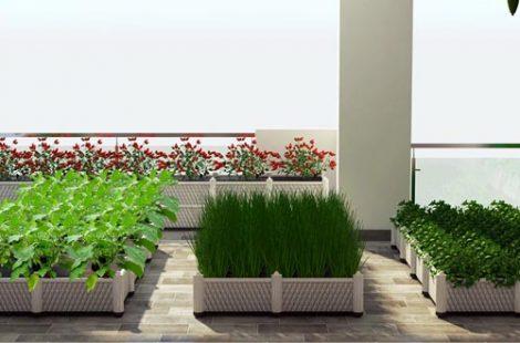 Thi công vườn rau sân thượng chú Hậu