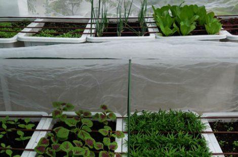 Thi công vườn rau sân thượng Quận 6 - Ms Hồng