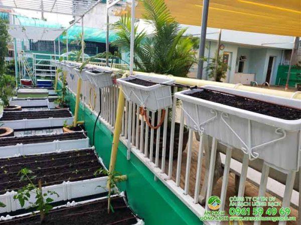 Vườn rau đẹp của ngôi trường mầm non
