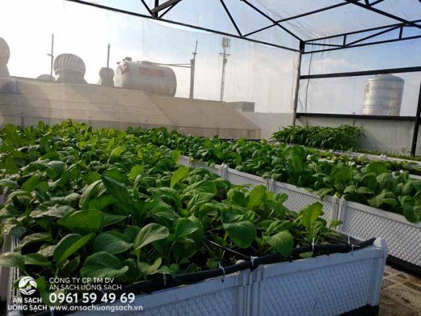 Vườn rau sân thượng giúp cung cấp rau sạch cho gia đình anh sử dụng