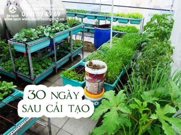 Vườn rau sau 30 ngày cải tạo