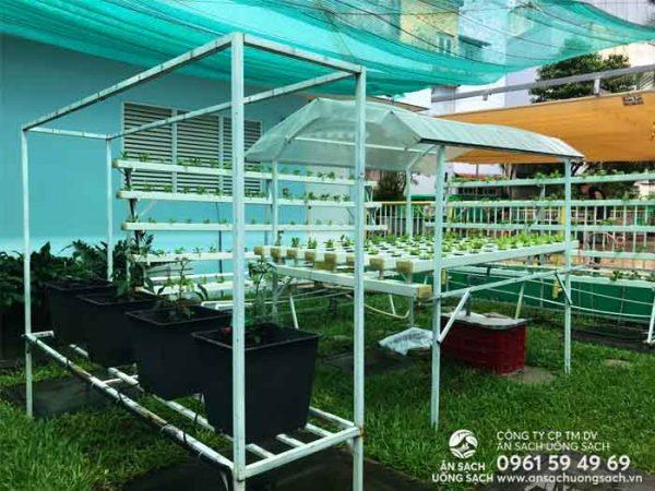Vườn rau thủy canh do kỹ sư Ăn Sạch Uống Sạch cải tạo