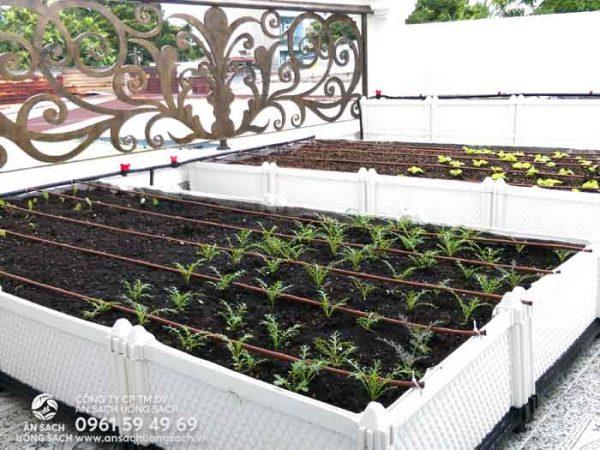 Cấy cây con và gieo giống cho khu vườn