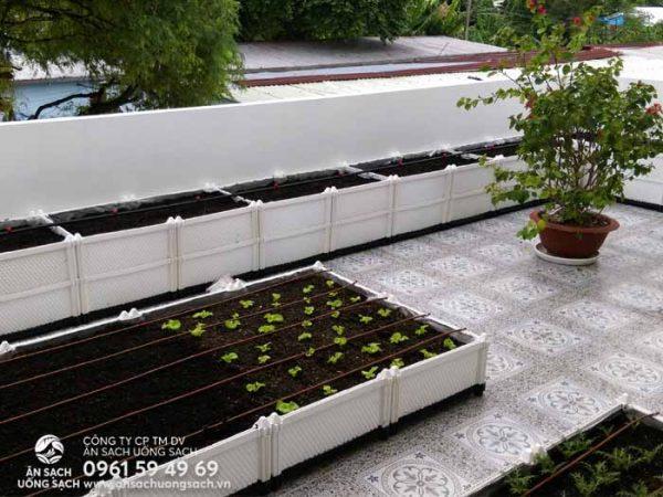Chậu ghép trồng rau có thể giúp bạn biến tấu khu vườn như ý