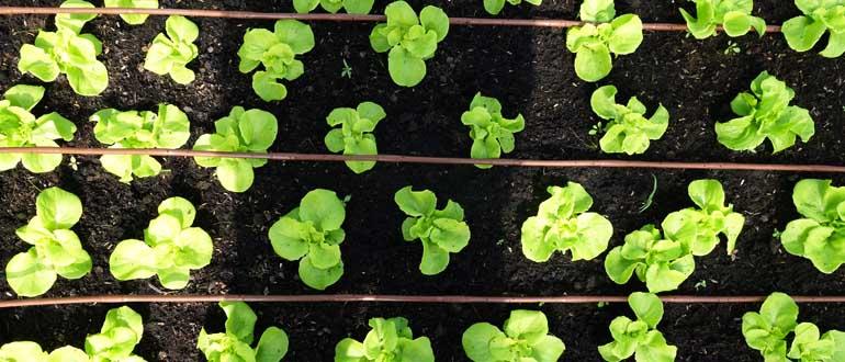 Đất trồng rau nào tốt