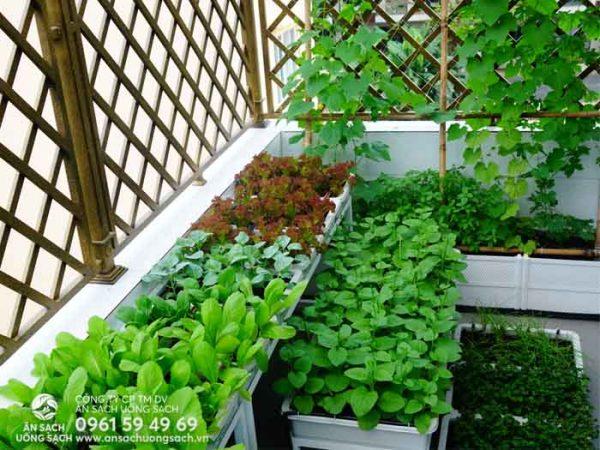 Không những để đáp ứng nhu cầu trồng và sử dụng rau sạch tại nhà
