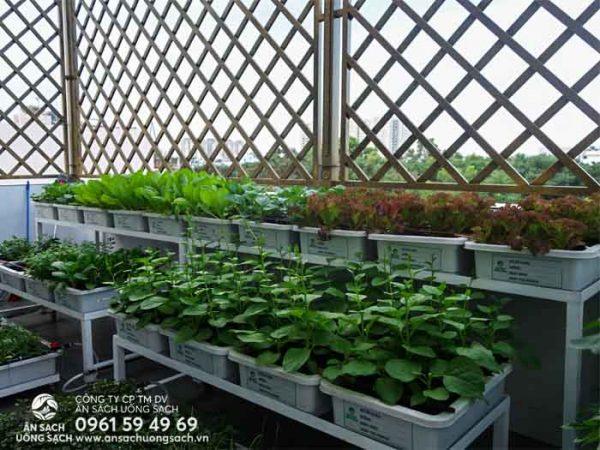Khu vực ban công phía sau là nơi đặt giàn trồng rau thông minh