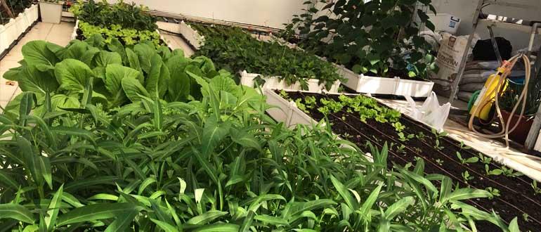 Kinh nghiệm trồng rau sạch