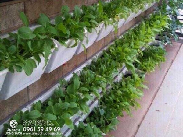 Module trồng rau giúp khu vườn trông thẩm mỹ và chắc chắn hơn