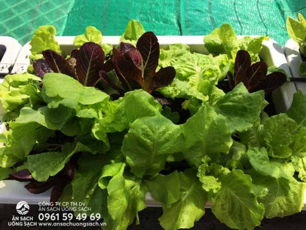 Sản phẩm thu hoạch được từ vườn rau của khách hàng