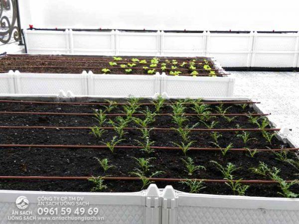 Vườn rau được bố trí ngăn nắp