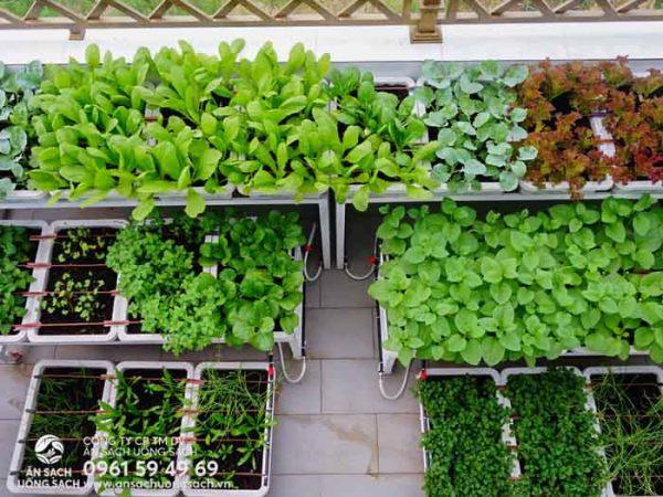 Vườn rau khi được nhìn từ trên cao xuống