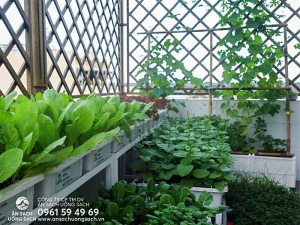 Vườn rau tươi tốt với nhiều loại rau trồng khác nhau