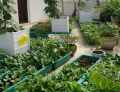 Cải tạo vườn rau sân thượng quận 3