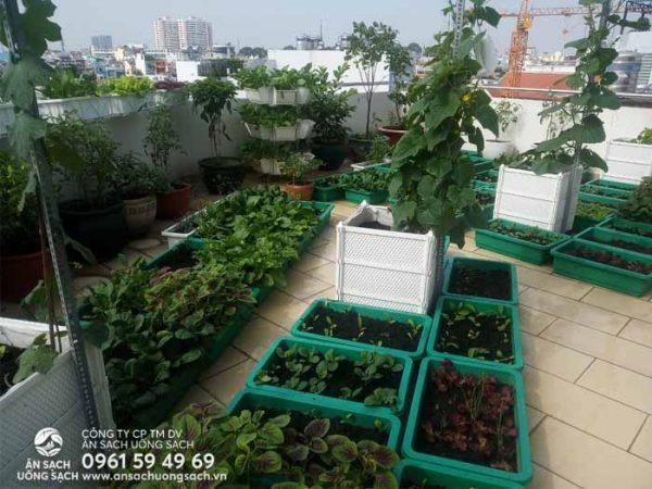 Khu vườn phía trước sân thượng