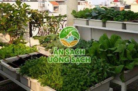 Vườn rau sân thượng anh thịnh gò vấp