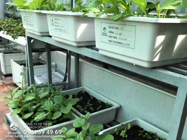 Bổ sung thêm một số chậu trồng rau cho khu vườn