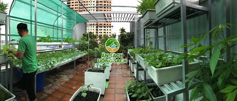 Cải tạo vườn rau sân thượng chị Thảo Tân Phú