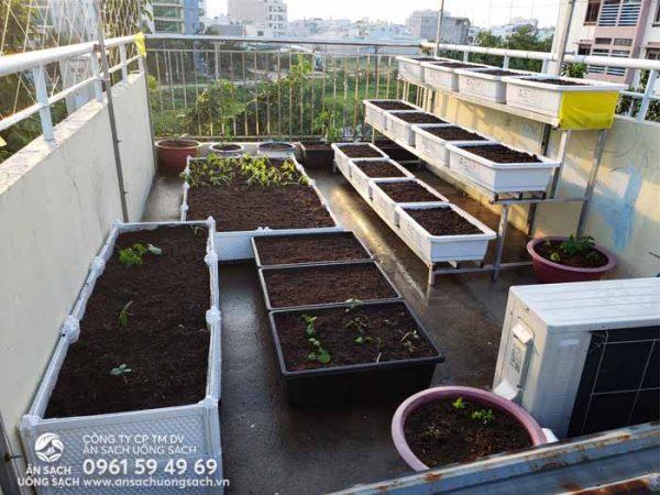 Một khu vườn hoàn toàn mới đã thay thế cho vườn rau cũ
