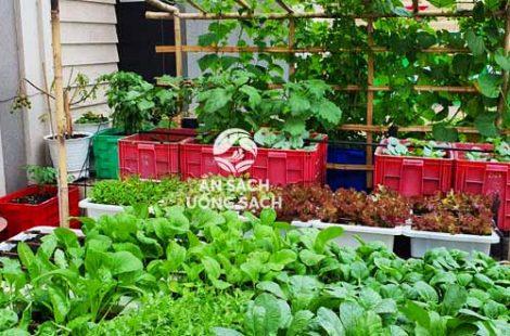 Thi công vườn rau nhà hàng nam bộ tân phú