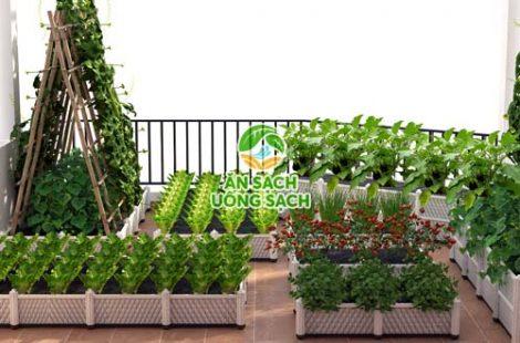 Vườn chị Phương Bình Thạnh