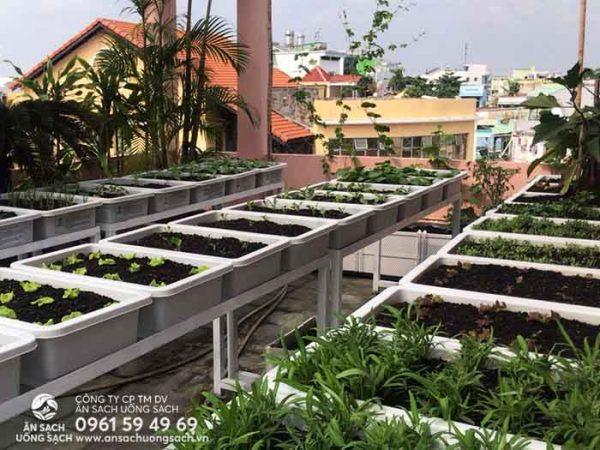 Vườn rau đơn giản nhưng đa dạng các loại rau xanh