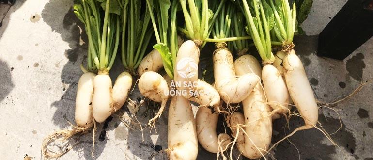 Cách trồng củ cải trắng