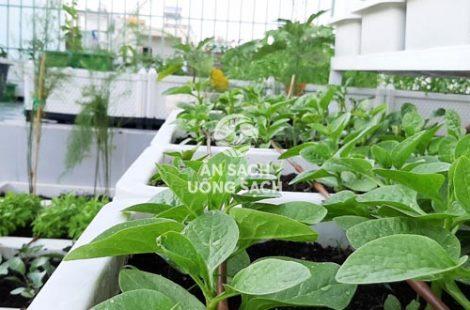 Thi công vườn rau anh Linh Tân Phú