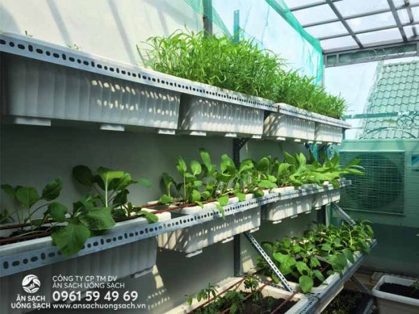 Tận dụng đúng loại ánh nắng để trồng cây