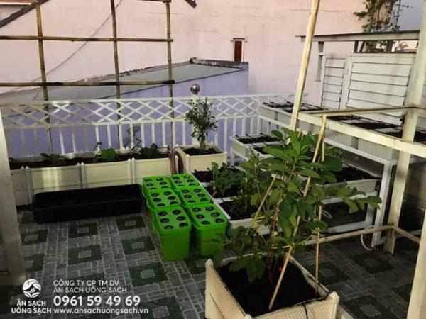 Vườn rau đa dạng các loại dụng cụ làm vườn