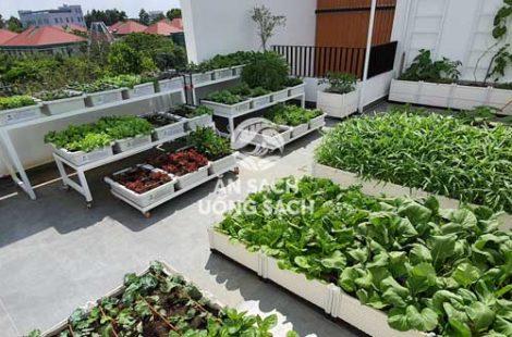 Thi công vườn rau anh Chánh