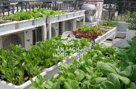 Thi công vườn rau anh Hùng quận 9